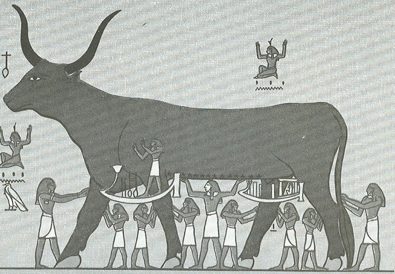 Bogowie - krowa